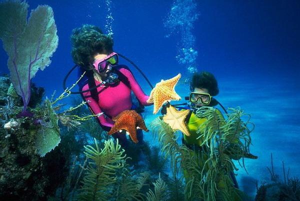 Дайвинг на Красном море • Статьи Морская Рыба В Воде
