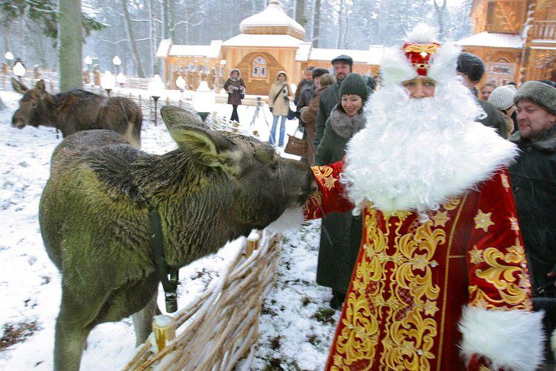 Беловежская пуща белоруссия новый год