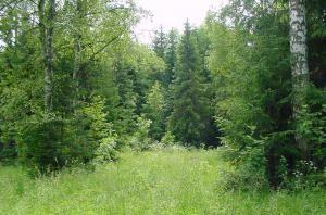 Леса Эстонии