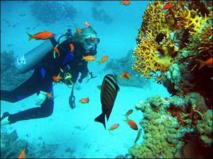 Подводная рыбная ловля