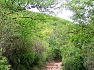 Национальный парк Маргалла Хилс