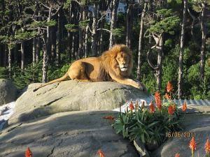 В зоопарке Веллингтона