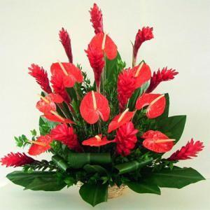 Цветок антариума