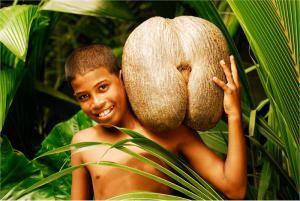 Кокосовый орех «коко-де-мер»