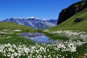 Лучший отдых в Альпах