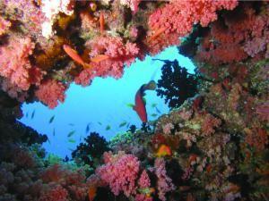 Банановый риф