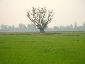 Рисовая миска Мьянмы