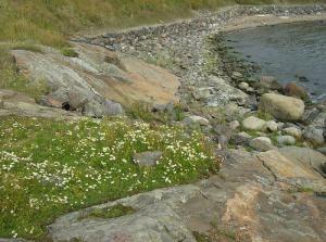Пляж Суоменлинна
