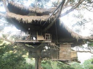 Лагерь на дереве