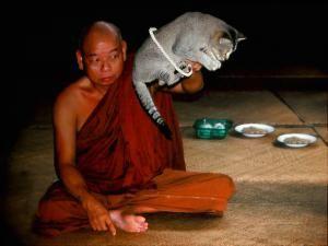 В монастыре прыгающих кошек