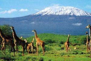 Национальный парк Килиманджаро