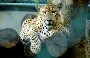 В зоопарке Дехивала