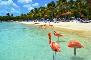 Фламинго на пляже Арубы